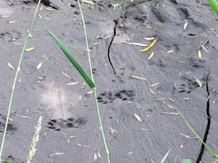 otterprints